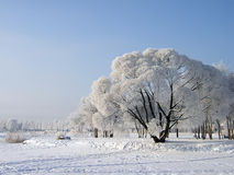 Árboles del invierno. Foto de archivo libre de regalías