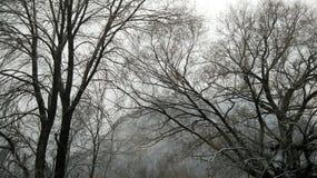 Árboles del invierno Foto de archivo libre de regalías