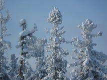 Árboles del invierno Fotos de archivo libres de regalías