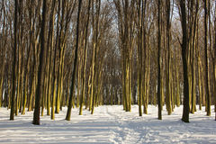 Árboles del invierno con el musgo Foto de archivo