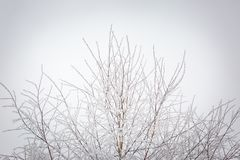 Árboles del invierno con la escarcha blanca Fotos de archivo libres de regalías