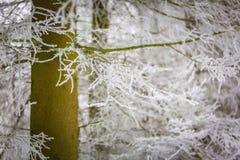 Árboles del invierno con la escarcha blanca Fotos de archivo