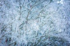 Árboles del invierno con la escarcha blanca Imagen de archivo