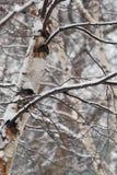 Árboles del invierno con nieve Foto de archivo libre de regalías