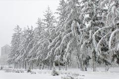 Árboles del invierno cubiertos en la nieve mullida blanca fotos de archivo
