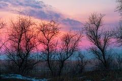 Árboles del invierno en fondo brillante del paisaje de la puesta del sol fotos de archivo libres de regalías