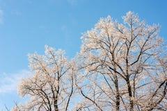 Árboles del invierno en la nieve Foto de archivo