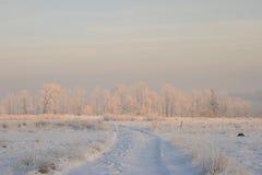 Árboles del invierno en la nieve Imagen de archivo