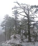 Árboles del invierno en montañas Foto de archivo libre de regalías