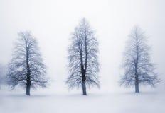 Árboles del invierno en niebla foto de archivo libre de regalías