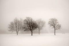 Árboles del invierno en niebla foto de archivo
