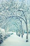 Árboles del invierno en nieve Foto de archivo libre de regalías