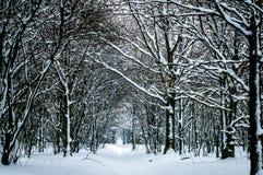 Árboles del invierno en nieve Imagen de archivo libre de regalías