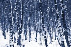 Árboles del invierno en nieve imagenes de archivo