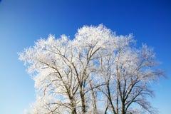 Árboles del invierno por completo de la nieve Imagen de archivo