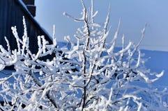 Árboles del jardín cubiertos con nieve blanca mullida Fotos de archivo