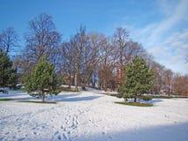 Árboles del jardín de la nieve Foto de archivo libre de regalías