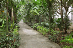 Árboles del jardín del parque de la manera de la trayectoria Imagen de archivo
