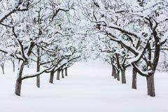Árboles del jardín en invierno Fotos de archivo libres de regalías