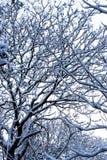 Árboles del jardín en nieve del invierno Imagen de archivo libre de regalías