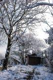 Árboles del jardín en nieve del invierno Fotos de archivo