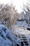 Árboles del jardín en nieve del invierno Foto de archivo libre de regalías