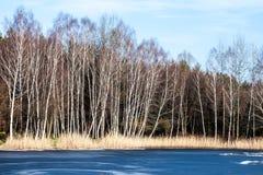 Árboles del lago y de abedul del paisaje de invierno, Polonia Foto de archivo