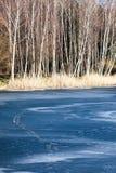 Árboles del lago y de abedul del paisaje de invierno, Polonia Imagenes de archivo