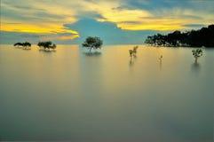 Árboles del mangle en agua Imagen de archivo libre de regalías