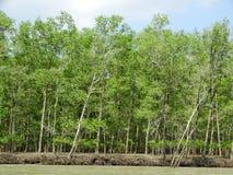 Árboles del mangle en el agua, parque nacional de Bako sarawak borneo malasia fotos de archivo