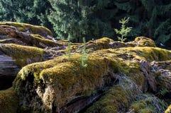Árboles del moldeado Foto de archivo libre de regalías