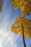 Árboles del oro en el parque del otoño Foto de archivo