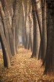Árboles del otoño Imagen de archivo libre de regalías