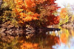 Autumn Trees imágenes de archivo libres de regalías