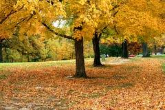 Árboles del otoño Fotografía de archivo libre de regalías