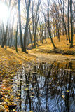 Árboles del otoño Fotografía de archivo