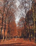 Árboles del otoño Foto de archivo