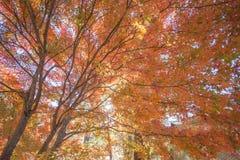 Árboles del otoño Fotos de archivo