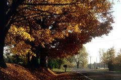 Árboles del otoño imagen de archivo