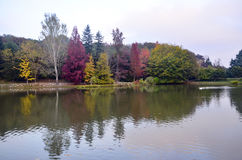 Árboles del otoño alrededor del lago Árboles de la caída reflejados en el lago Fotografía de archivo libre de regalías