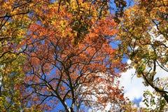Árboles del otoño, amarillo verde rojo Foto de archivo