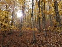Árboles del otoño con el aumento del sol Fotos de archivo libres de regalías