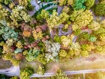 Árboles del otoño con la trayectoria Foto de archivo