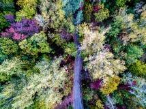 Árboles del otoño con la trayectoria Imagenes de archivo