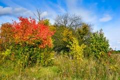 Árboles del otoño con las hojas del rojo y el cielo azul Imagenes de archivo