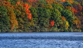 Árboles del otoño de la cara del río Imágenes de archivo libres de regalías