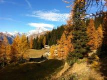 Árboles del otoño de las montañas Imagen de archivo