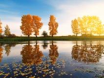Árboles del otoño detrás del río fotos de archivo