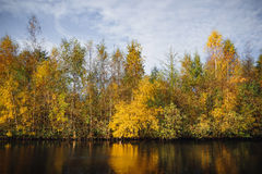 Árboles del otoño en colores amarillos en la caída Foto de archivo