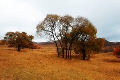 Árboles del otoño en el prado Imagen de archivo
